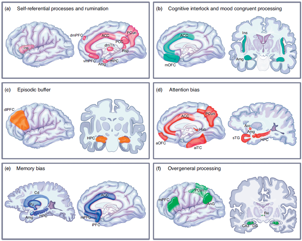 Brain networks involved in various cognitive functions of cognitive therapy neural networks